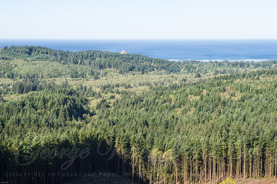 Ecola Forest Reserve