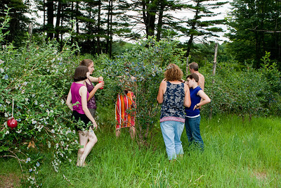 Gennie, Rachel, Abby, Tina, Alli, and John picking blueberries.