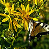 """Submitted photo<br /> Of a habitat, the guest speaker observed, """"As soon as you build it, they come"""" and begin pollinating nearby plants, a necessary step for the growth of many fruits and vegetables."""