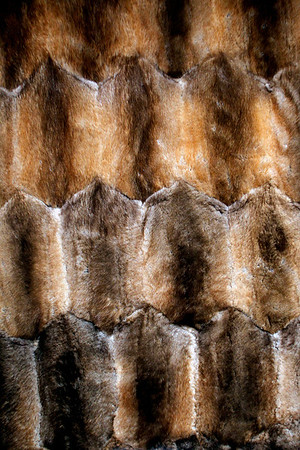 Record-Eagle/Jan-Michael Stump<br /> Michael Henke used muskrat pelts, such as these seen in a blanket at his Fridrich Furs, as inspiration for his business's logo.
