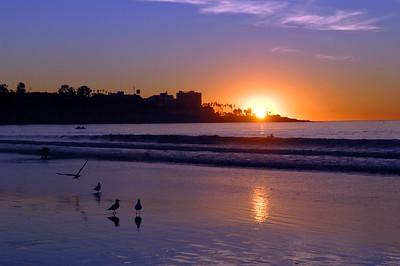 La Jolla Shores Nature Photos