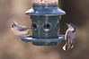 Titmouse and Nuthatch