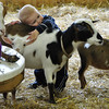 This young boy finds a new friend in the Fryeburg Fair's petting zoo at Old McDonald's Farm. The 159th edition of the Fryeburg Fair runs through October 11th, 2009