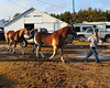 Two draft horses are led toward the scales early on opening day of the 159th Fryeburg Fair. Maine's blue ribbon classic runs through October 11th, 2009.