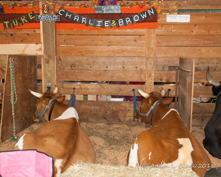 Seeing the names on this oxen team made us think of our friends the Browns who have a daughter nicknamed Charlie