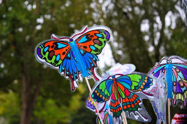 Butterfly-25-25