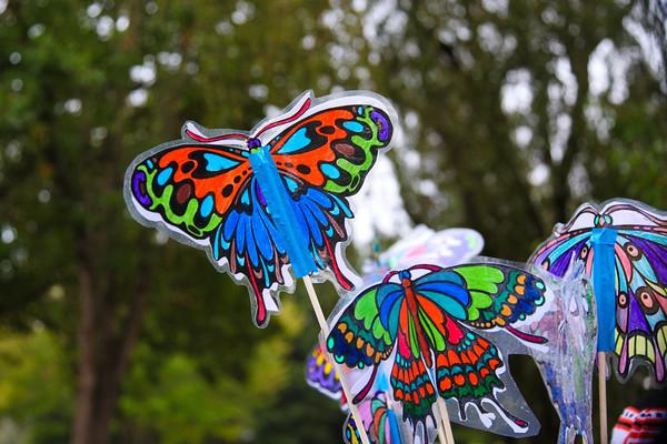 Butterfly-26-26