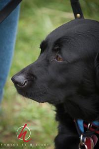 DogWalkHiRes-6-2