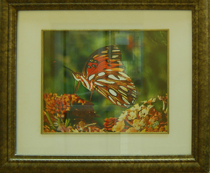 Butterfly Art<br /> Framed Photography<br /> Rhonda Pyatt<br /> $80