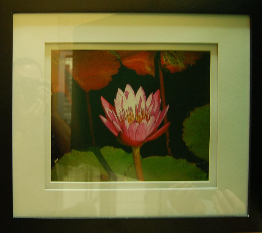 Water Lilly<br /> Framed Photograph<br /> Rhonda Pyatt<br /> $80