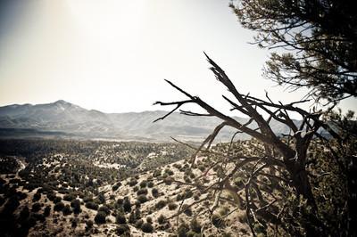 Day in the Desert