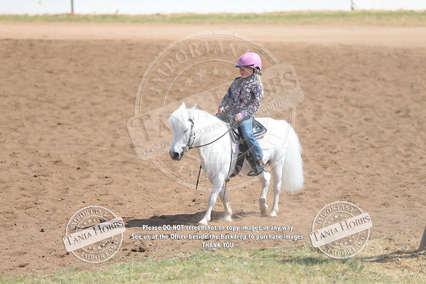 Gatton Youth and Amateur Clinic and Show
