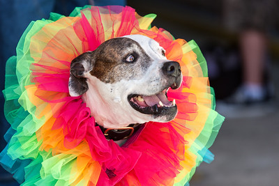 GayPride2014-123