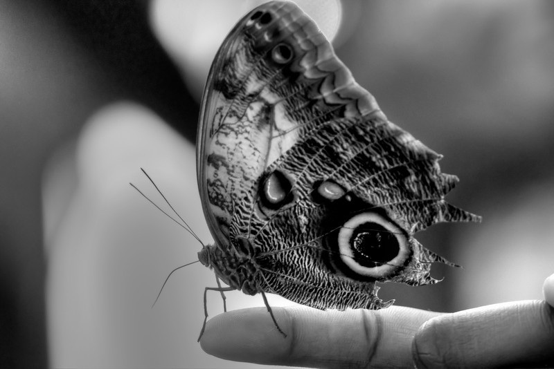 Butterfly Finger b&w