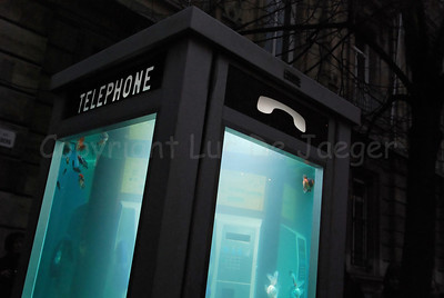 A phone-booth filled with fish by Benedetto Bufalino and Benoit Deseille during the 2012 Light Festival in Ghent (Gent), Belgium.