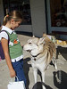"This is ""Lex"" the Eastern Timber Wolf. A lot of people had their pets with them in all the different stops that we made."