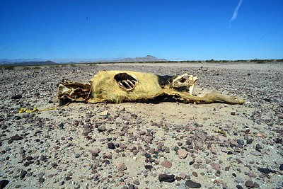 a reminder that the desert is a hostile place