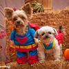HalloweenGlobal10