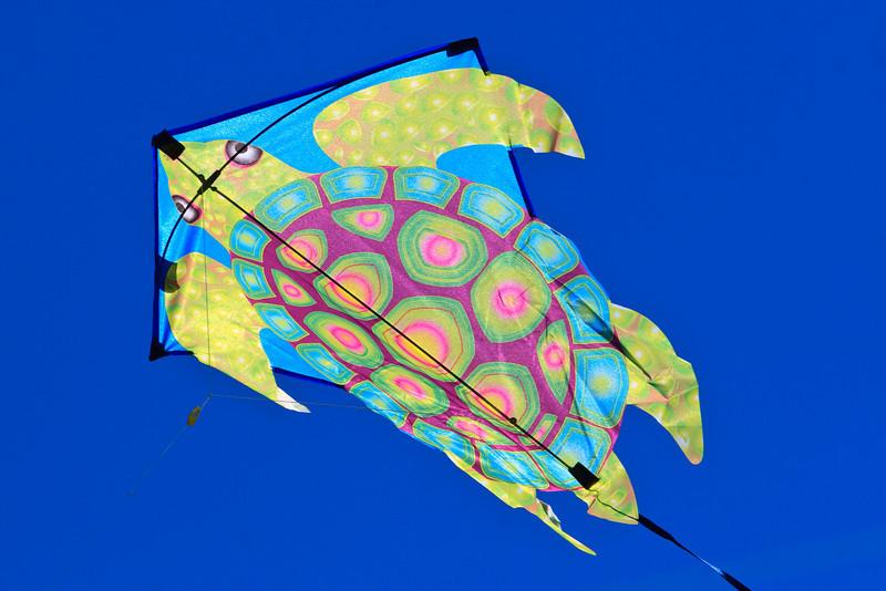 tutle kite