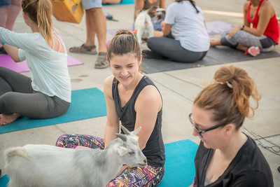 Deep Ellum Goat Yoga July 28