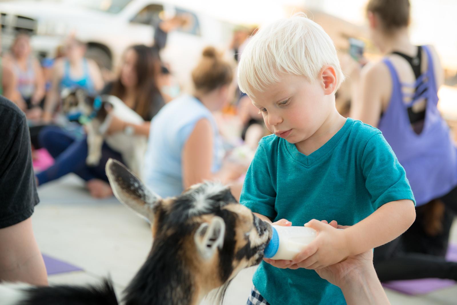Goat Yoga June 2017