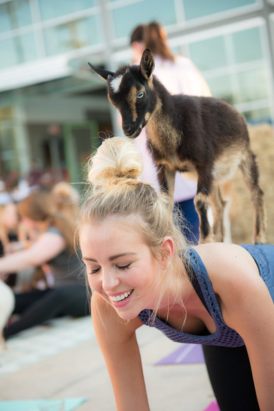 Goat Yoga June 2017