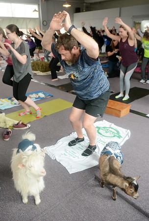 0217 goat yoga 5