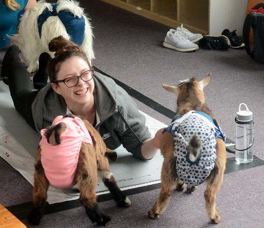 0217 goat yoga 10