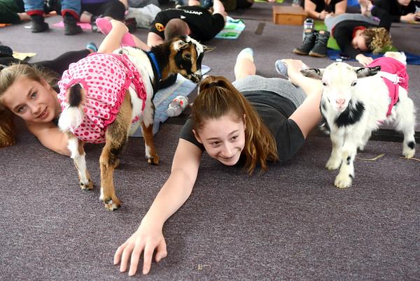 0217 goat yoga 9