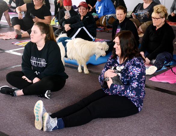 0217 goat yoga 13