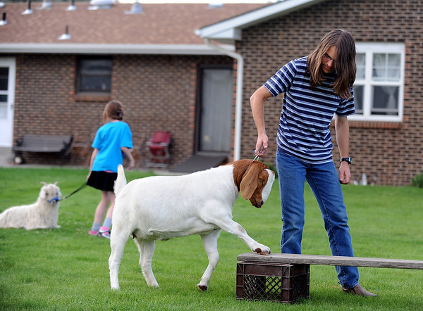 Terrell Pohlmann guides his goat over  a utility obstacle for practice.<br /> Participants in Boulder County 4-H practiced showing goats at the home on Tina Pohlmann of Erie.<br />  Cliff Grassmick / July 24, 2010