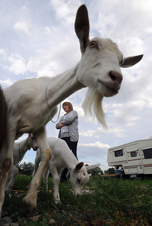 Taylor Abfalter waits with hers goats for practice for the Boulder County Fair.<br /> Participants in Boulder County 4-H practiced showing goats at the home on Tina Pohlmann of Erie.<br />  Cliff Grassmick / July 24, 2010