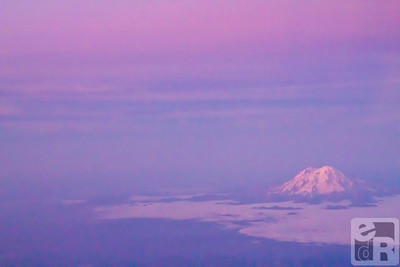 Ranier in majestic purple