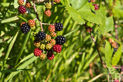 Berries in the park