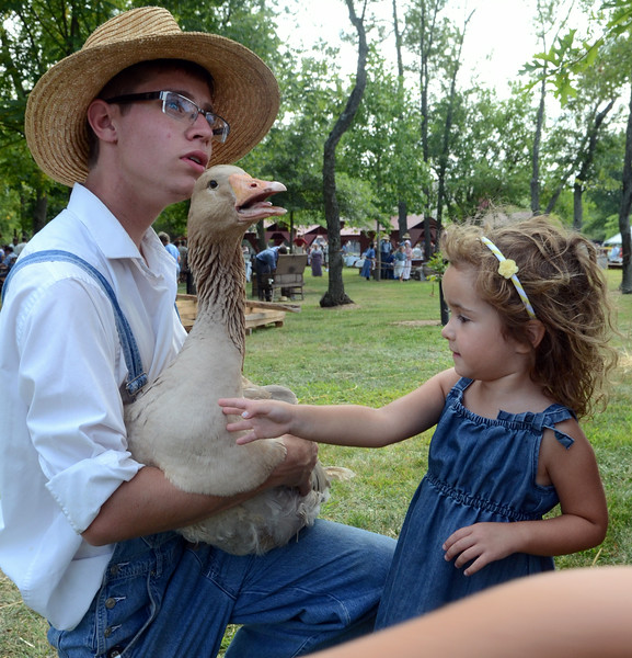 Nick Jones holds a goose for children to pet during the Goschenhoppen Historians' 48th annual Folk Festival on Friday August 8,2014. Photo by Mark C Psoras