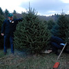 "Kayla Rice/Reformer<br /> Governor Peter Shumlin cuts the tree of his choosing at Elysian Hills Farm in Dummerston. The tree will be this year's ""holiday tree"" for the Pavilion Office Complex in Montpelier."