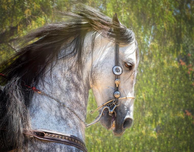 Horse 11x14 Final copy