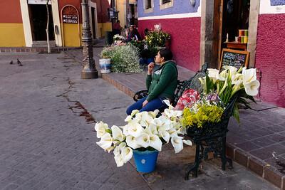 Lilies in Plaza del Baratillo (bargains)