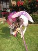 Bonita, the Tutu Fairy Princess