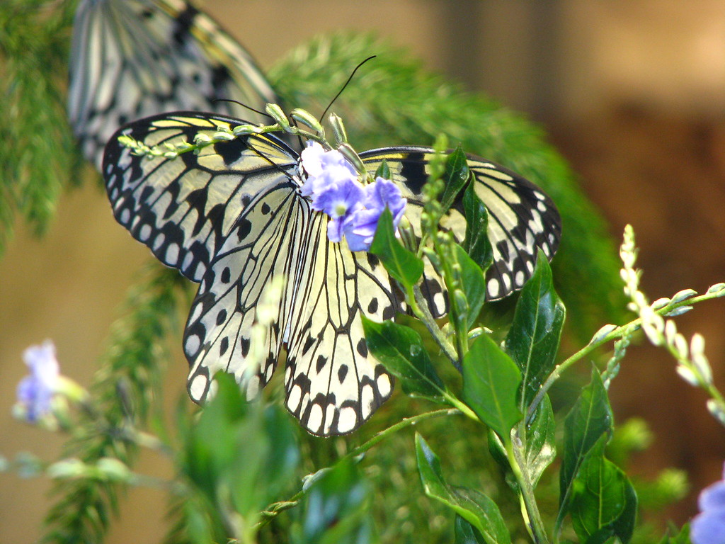 A butterfly inside the little greenhouse in the flower garden.