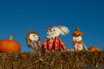 humc-pumpkin-patch-01