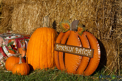 humc-pumpkin-patch-03