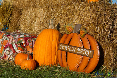 humc-pumpkin-patch-02