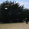 Habitat For Humanity<br /> Kite Festival, Todd's Point<br /> Fort Bragg, CA on the Mendocino Coast<br /> June 11, 2011
