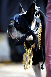 Rapper dog