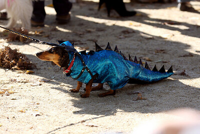 dinosaurs dog