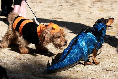 bumblebees dog and dinosaurs dog
