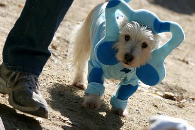 Blue clue dog