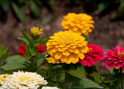 Hampton Court Flower Show