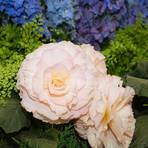 Hampton Court Flower Show 2009